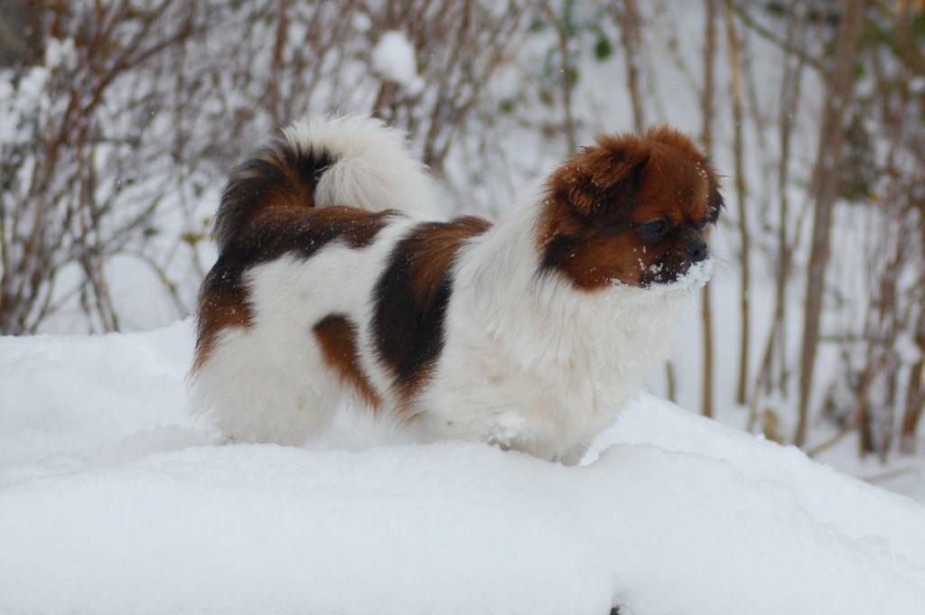 17-12-2009-hunde-i-sne-106