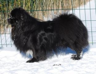 oliver-after-prins-i-sneen