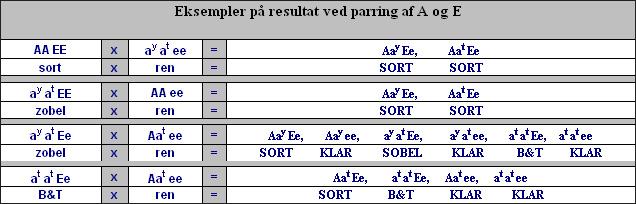 parring-A-E