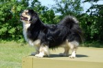 Hundmando Pronto kaldes Pronto