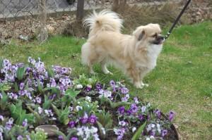 Dia med blomster