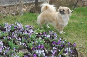 Dia blomsterduft