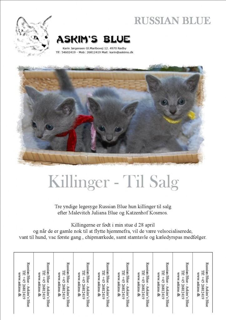 russian blue killinger til salg
