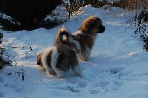 15.01.2013 Olympia og Ponya 017