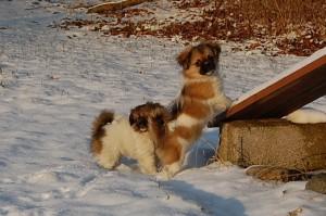 15.01.2013 Olympia og Ponya 026