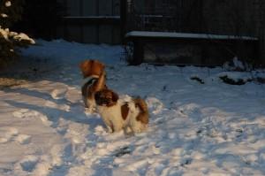 15.01.2013 Olympia og Ponya 029