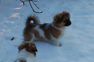 15.01.2013 Olympia og Ponya 036