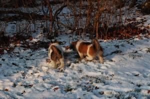 15.01.2013 Olympia og Ponya 066