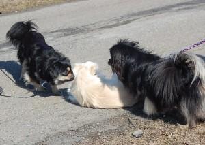 Balu, Daisy og Camaro