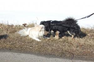 Daisy og Balu