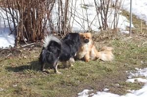 Balu og Ruby