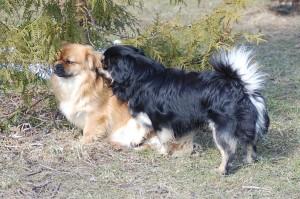 Ruby og Balu