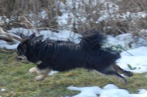 Balu i flyvende fart