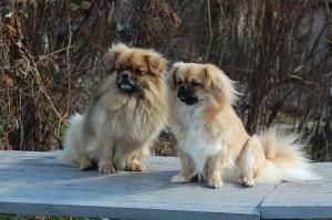 Jeddi og Kia