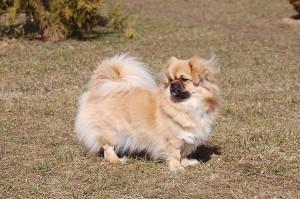 Her kan man se hendes ørefrynser i vinden