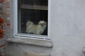 Luk mig nu ud !