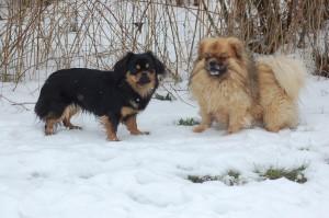Bonnie og Jeddi