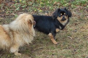 Jeddi og Bonnie