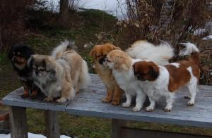 Bonnie, Andie, Ruby, Milla og Ley-La