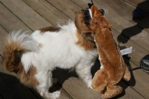 Den ræv er højt elsket