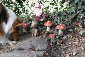 Nogle søde jyder gav Laila en nisse som har fundet sin plads i haven
