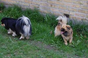 Pronto og Olivia på opdagelse