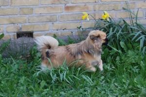 Olivia på spring