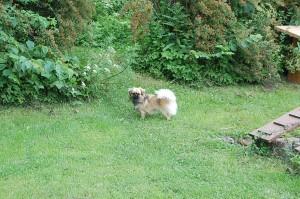 En lille hund i en stor have