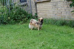 25.06.2013 Pronto og Olivia 079