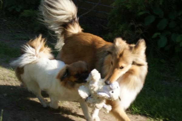 Ponya bliver trukket hen til mor