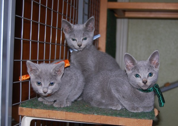 Katriona, Jabba og Jafar