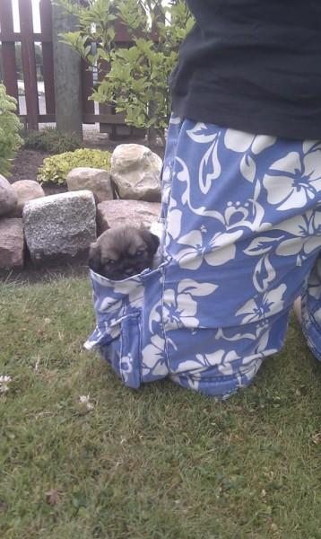 Shogun med på havevandring med far