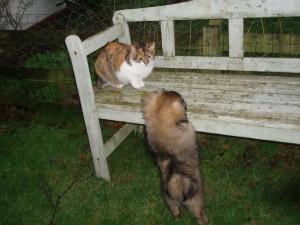Jeg kan da få den jaget op på bænken