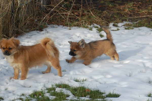 Ruby og Uncas