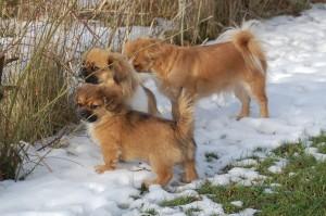 Uncas, Olympia og Ruby