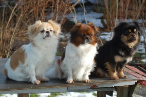 Milla, Ley-La og Bonnie