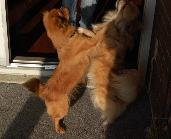 Basha og Joe danser for en godbid