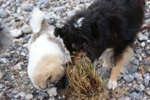 Luna viser Emme hvor det dufter dejligt