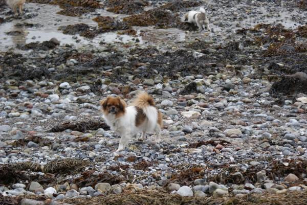 Ponya og Emmi på stranden