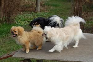 Thyra, Pronto og Daisy
