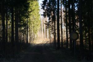 Denne stille skovvej lokkede os ud på en dejlig morgentur