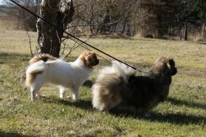 To lækre hunde