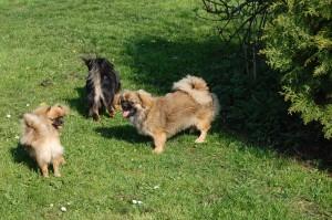 Tosca, Bonnie og Tiara