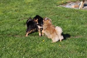 Bonnie og Tiara