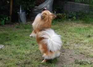 Jeg er altid så glad så jeg danser