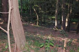Et kig mellem træerne til vandløbet i bunden