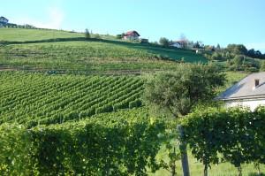 En vinmark