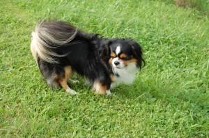 Misko har den flotteste hale