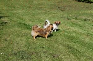 Tosca og Wita