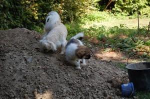 Jordbunken var spændende for Daisy og Wita
